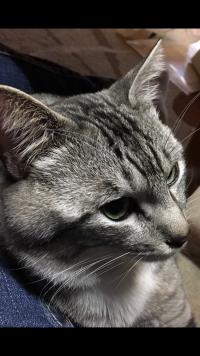 【にぇむろぐ】クーちゃんの総集編と子猫ちゃん