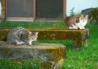 シュレディンガーの猫テロ