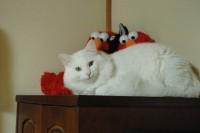 お手製猫さん用オモチャで遊ぼう♪【ソラネコさんちの思い出】page30