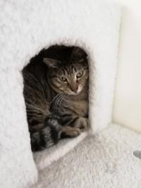 クソニートの日常 猫カフェに行くのが趣味。