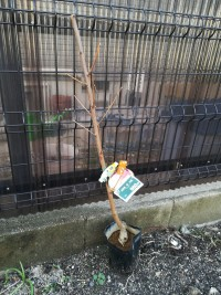 おどろき桃の木山椒の木だよ!