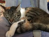 【にぇむろぐの日】我が家の猫