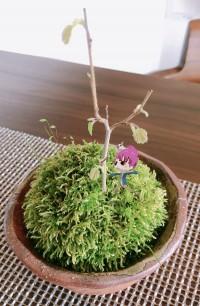 えっさん観察記:芽が出てたよ