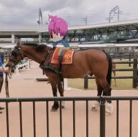 【nemlog探検隊】お馬さんに乗ったよ!お馬さんの銅像見っけたよ!
