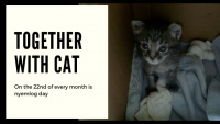 2019年5月の『にぇむろぐの日』、AIM製剤で猫の寿命は30年に!?