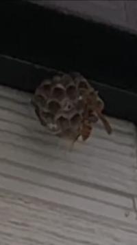 蜂の巣駆除。防虫どのようにしてますか?