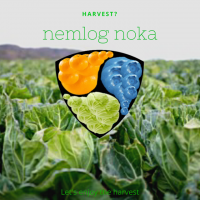 ネムログノーカ【モロッコインゲン収穫】