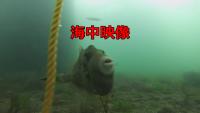 【海中撮影】9月の海