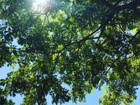 博多に夏が来ました!
