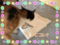 Tシャツ作りました&届きました«٩(*´ ꒳ `*)۶»