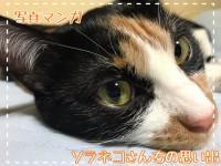 【空回り】頑張る猫、報われた?【ソラネコさんちの思い出】page42