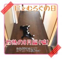 ストーカー猫あらわる【ソラネコさんちの思い出】page43