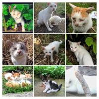 「猫の二重唱」ロッシーニ