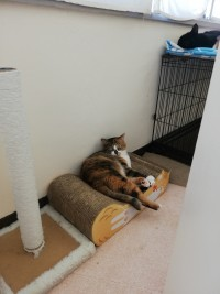 【にぇむろぐの日】シャーシャー猫はついにキャリーのお外へ。