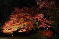 六義園のライトアップされた紅葉を撮影してみたよ。