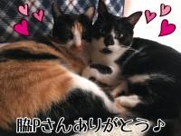 【脇Pさん】ラッキー過ぎる新春5日間振り返り【ありがとう】