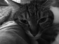 【にぇむろぐの日】犬猫メモリアル & ARネコ