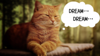 [夢よ叶え]みんなの夢が揃った![イベント結果報告]