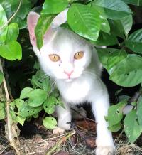 猫の島(ΦωΦ)