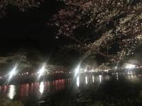 ネムツア2 3/27 茂原公園は桜満開
