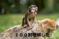 猿でもわかるSymbolへのローンチで気になる事 という記事投稿をしてみた