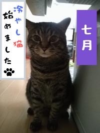 nemlogイベント情報・NEMニュース(2020年7月16日)