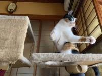 【交流イベント】猫の遊ぶ姿【にぇむろぐの日】