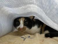 猫は股間で長くなる【にぇむろぐの日】