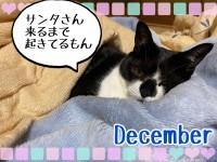 滑り込め!カレンダー!12月