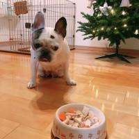 今日は小梅ちゃんの誕生日🎂