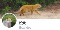 ピ犬 px_dog