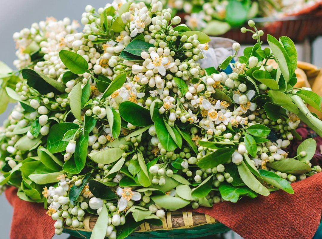 Hà Nội ướp hương thơm ngát khắp phố phường mùa hoa bưởi, hoa sưa