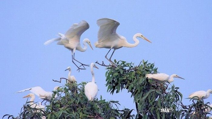 bang-lang-stork-sanctuary-daily-travel-9.jpg
