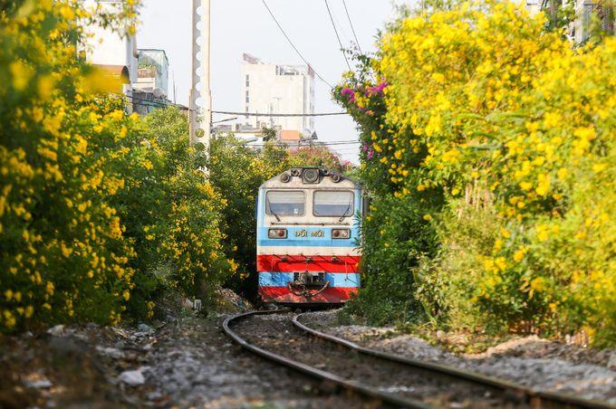 Sài Gòn mùa hoa quỳnh liên vàng rực một góc trời khiến du khách mê mẩn