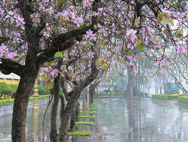 Những thú vui rất riêng của Hà Nội khi giao mùa tháng 3