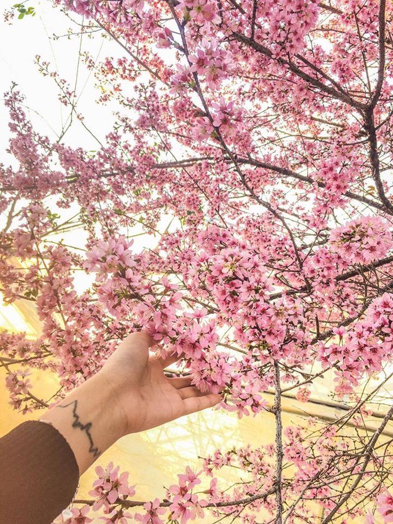 Ngất ngây 4 địa điểm ngắm hoa mùa xuân đẹp nhất Việt Nam