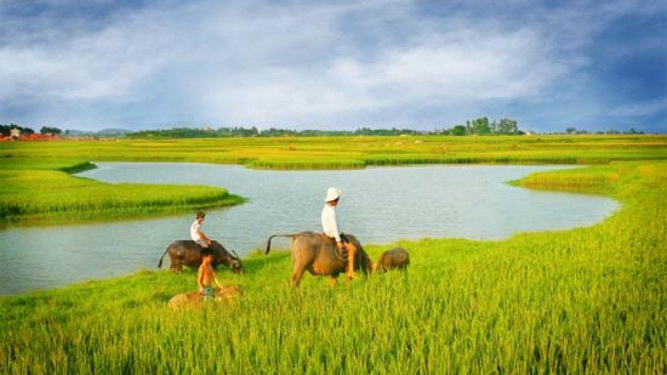 1575274031-thai-binh-mien-que-gan-lien-voi-nhung-canh-dong-lua-bat-ngat-1.jpg