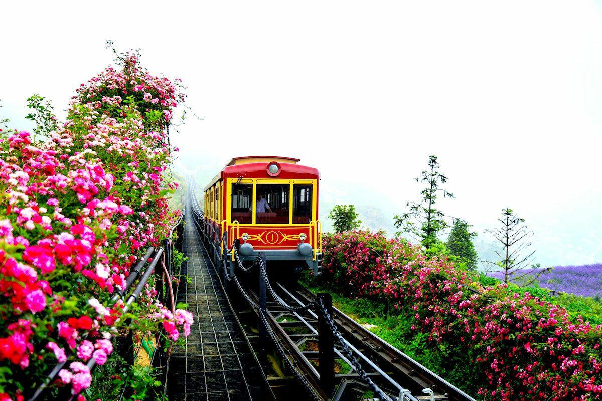 Chìm đắm trong cảnh sắc tuyệt đẹp của thung lũng hoa hồng lớn nhất Việt Nam ở Sa Pa
