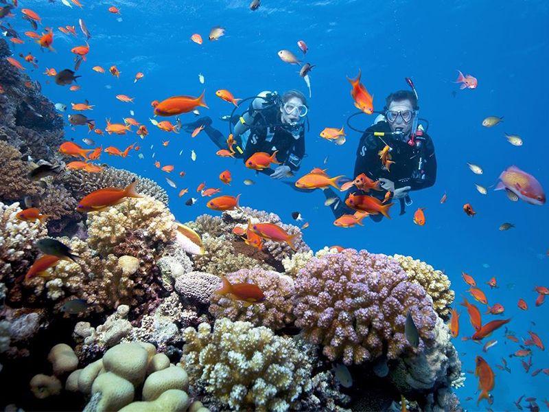 Muốn lặn biển ở Nha Trang cần biết những điều gì?
