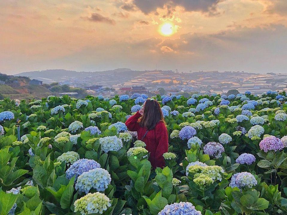 ダラットの最も綺麗な5種の花