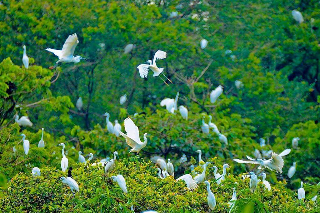 Chìm đắm trong thiên nhiên bình yên tại Vườn cò Bằng Lăng ở Cần Thơ