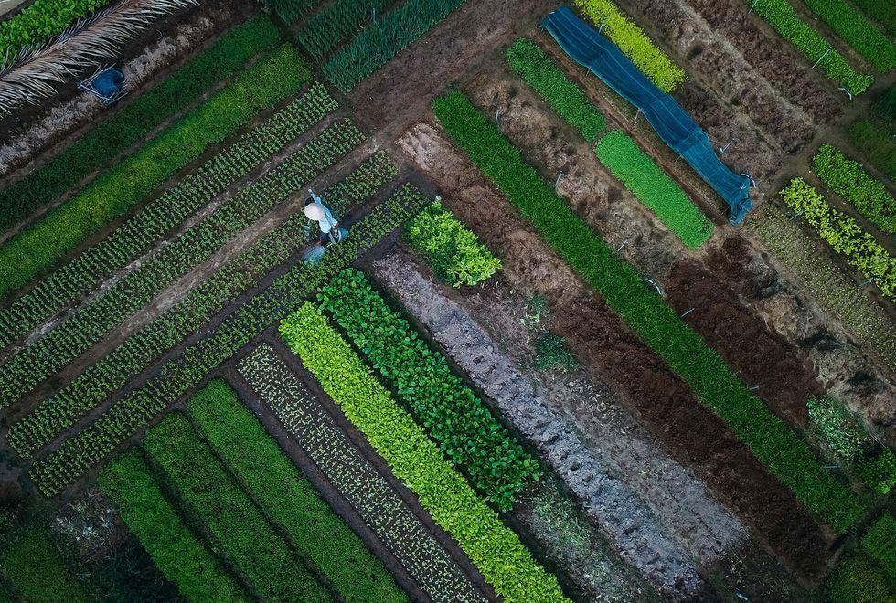 Thăm làng nghề trồng rau Trà Quế bình yên ở Hội An