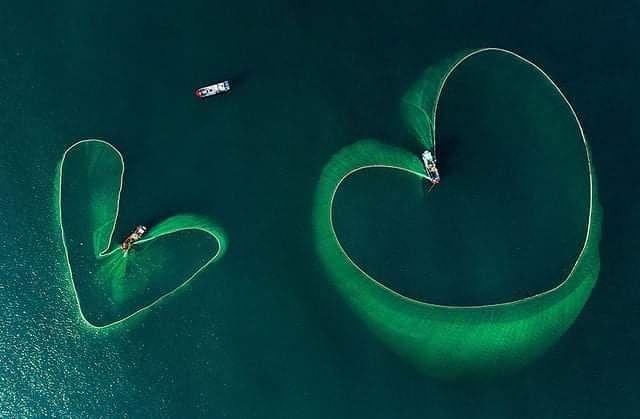 Đắm chìm trong khung cảnh tuyệt đẹp mùa lưới vây ở Hòn Yến