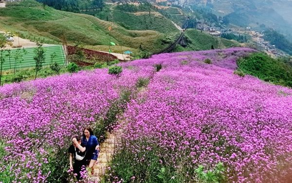 5 địa điểm giúp bạn trải nghiệm bốn mùa trong một ngày ở Việt Nam