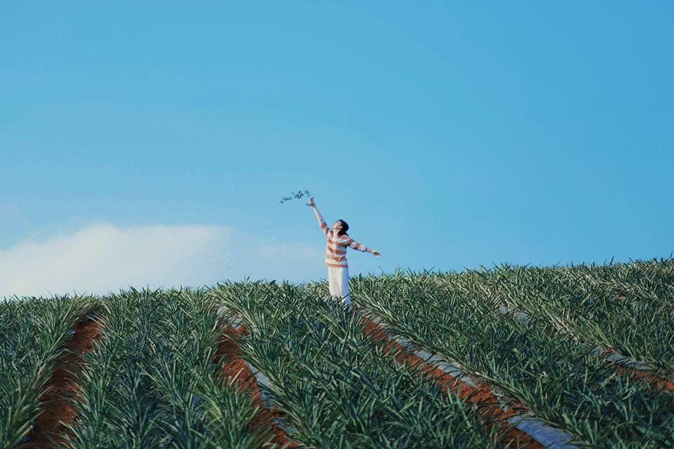 Mãn nhãn đồi dứa Tam Điệp xanh ngát nổi tiếng ở Ninh Bình