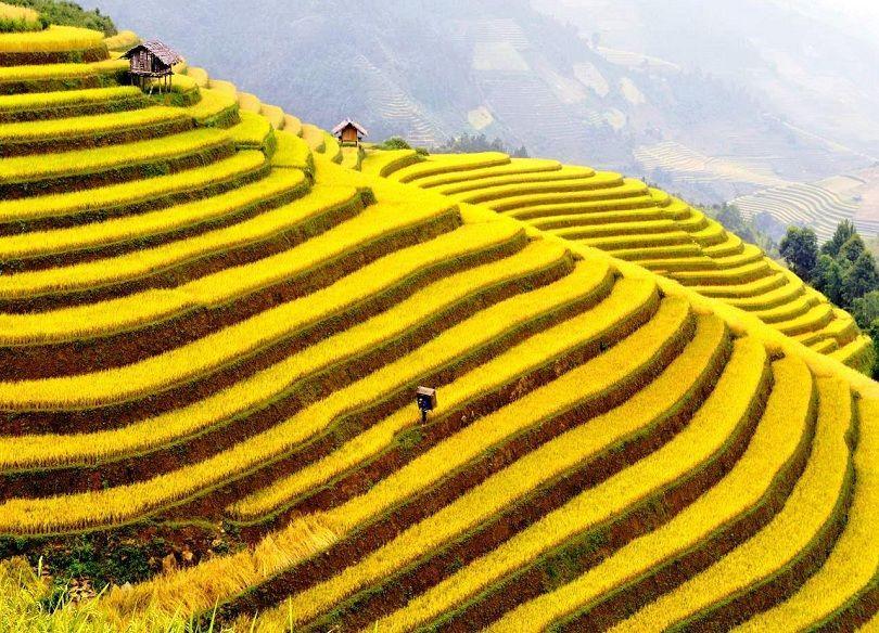 Ghé thăm Hoàng Su Phì ngắm ruộng bậc thang đẹp như tranh vẽ