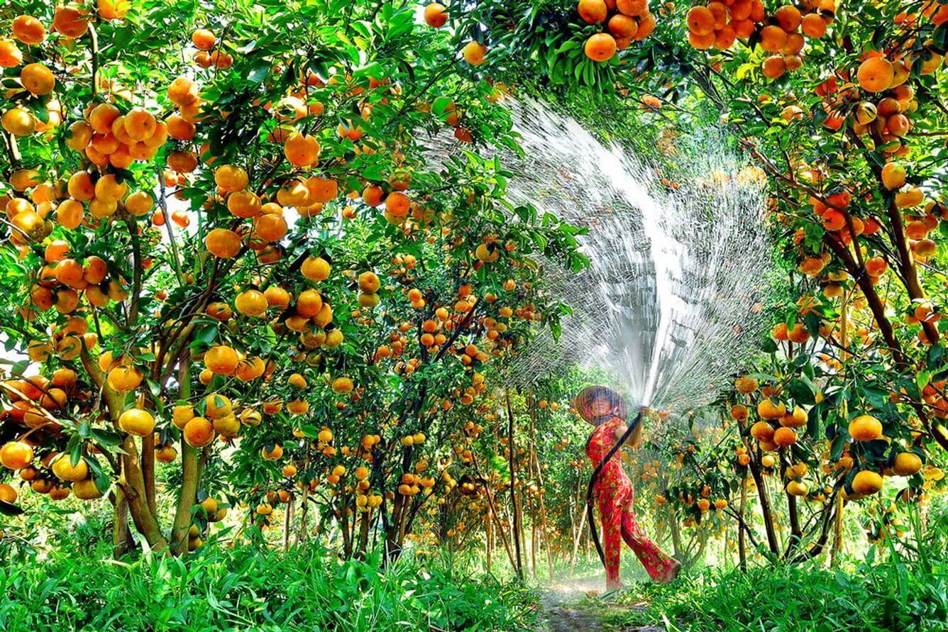 Lạc lối ở 'thiên đường' cây trái và hoa thơm ở Cái Mơn