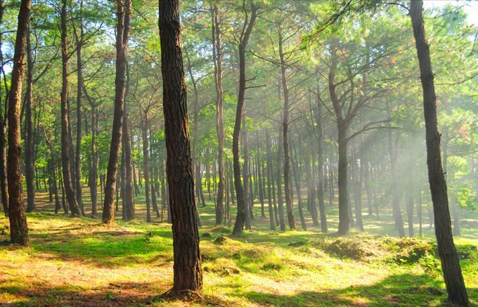 Four must-visit destinations in Ba Vi National Park