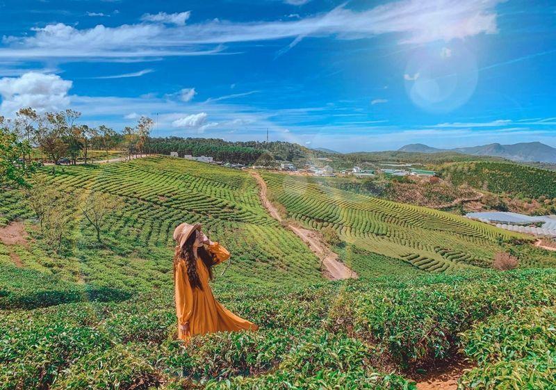 ダラットに来たら、美しく平穏なカウダット茶畑を逃すべきではない