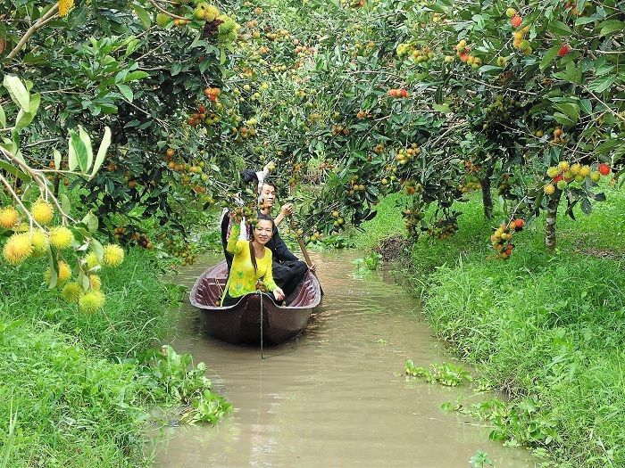 Coming to the three largest orchards in Tien Giang to enjoy all kinds of tasty fruits